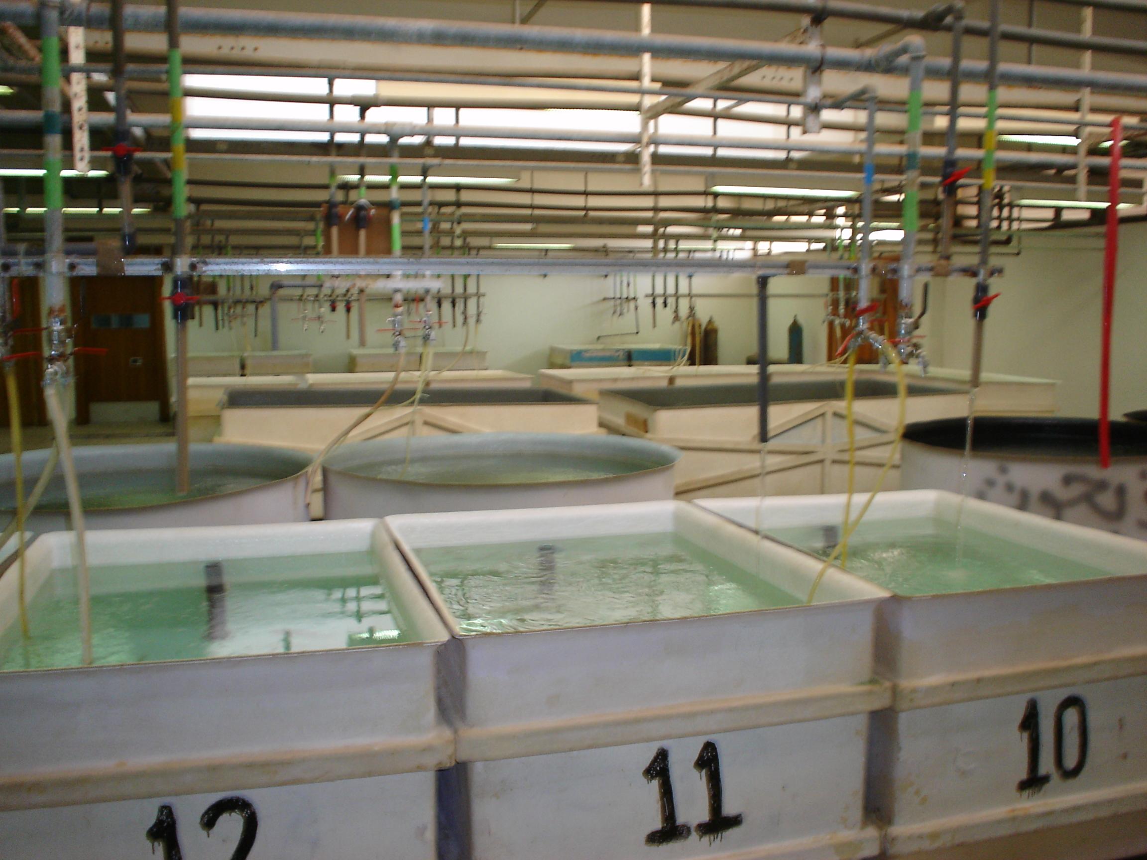 قسم بحوث الزراعة المائية